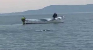 Irish Sea Monster in Lough Foyle
